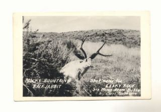 ROUNTAIN RACK JABBIT LEAKY ROOF Butte Montana Vintage RPPC Postcard
