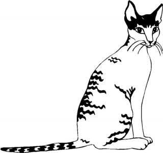 Cornish Rex Cat Graphic Decal Sticker