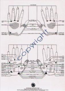 DOREEN BAYLY REFLEXOLOGY HAND REFLEX CHART .. laminatedNEW