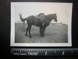 01613 cowgirl stands behind horse, can only c face looking thru saddle